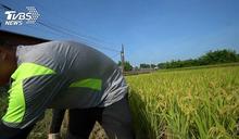 兩樣情!農民退休金再加碼 勞保難逃2026破產?