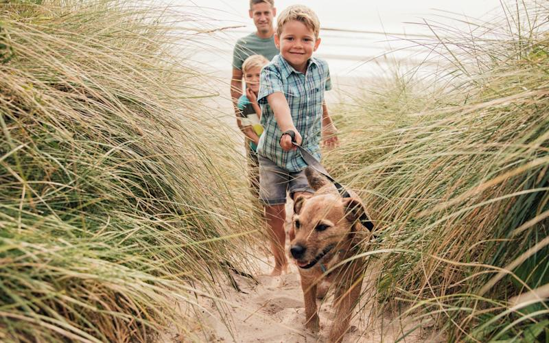 Holiday with every member of the family this year - istock