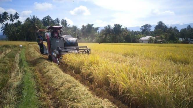 Kementan Ingatkan Kembali Petani untuk Manfaatkan Asuransi Pertanian