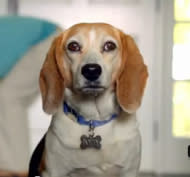 This Talking Beagle PSA is Funny and Not at All Scary