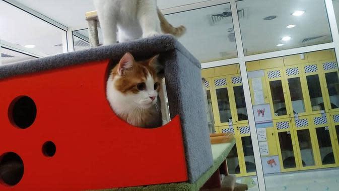 Hotel mewah untuk kucing, Urban Tails, Dubai, Uni Emirat Arab. (dok. Instagram @urbantailsdubai/https://www.instagram.com/p/B3wwkdtpGei//Adhita Diansyavira)