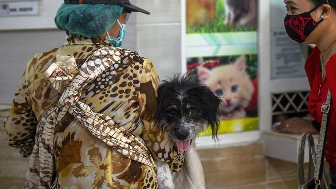 Seorang wanita yang mengenakan masker terlihat membawa anjingnya untuk menjalani perawatan di ruang tunggu Rumah Sakit Hewan Jakarta (RSHJ) di Ragunan, Jakarta (22/9/2020). Didirikan pada 1993, RSHJ merupakan salah satu rumah sakit hewan tertua di Indonesia. (Xinhua/Agung Kuncahya B.)