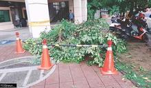 南市成立路樹倒伏處理平台及定期巡檢行道樹 路樹倒伏大減