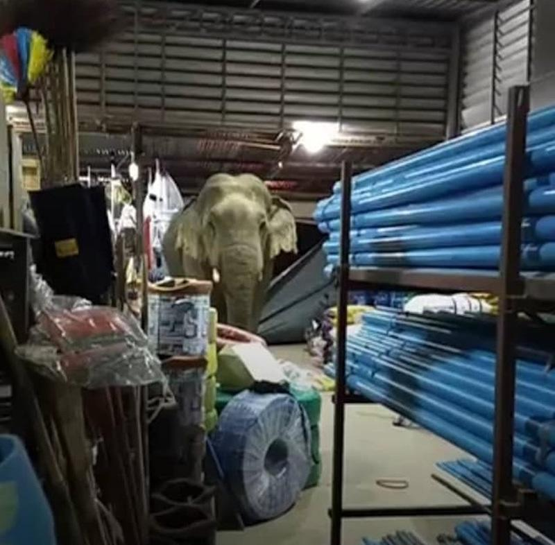 The bull elephant gave in to temptation and tore down a metal shutter at a food supply store in Kaeng Krachan National Park, Phetchaburi. — Picture from Facebook/Siriphon Kerdsuchon