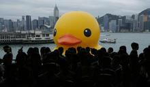 【過去現.在未來】黃鴨訪港 人人影「Duck」 2013年