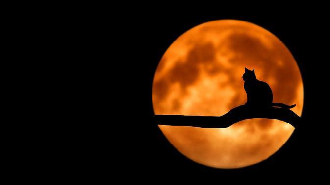 Ilustrasi malam hari. (sumber: Pixabay)