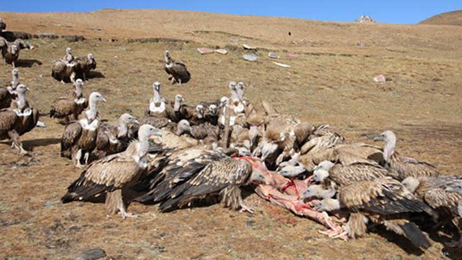 Tradisi pemakaman langit di Tibet hingga saat ini masih terus berjalan.