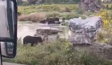飼育員遭「5隻熊拖走」撕咬喪命!上海野生動物園急關閉