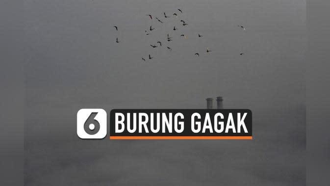 VIDEO: Viral Burung Gagak Penuhi Langit Kota Wuhan