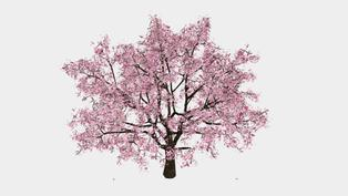 【AR賞花】不能出國沒關係!給你專屬櫻花樹