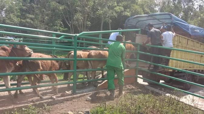 Kementan Distribusikan Sapi Pesisir ke Bengkalis dan Mentawai