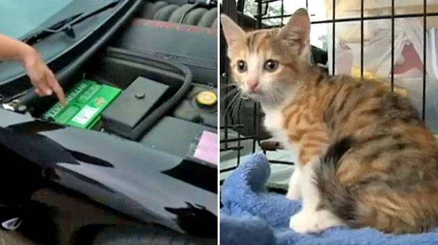 Kitten survives 180-mile ride trapped in Chevy Corvette's engine bay