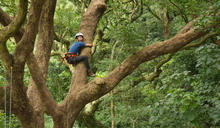 雙流森林療癒課程體驗攀樹做精油 (圖)