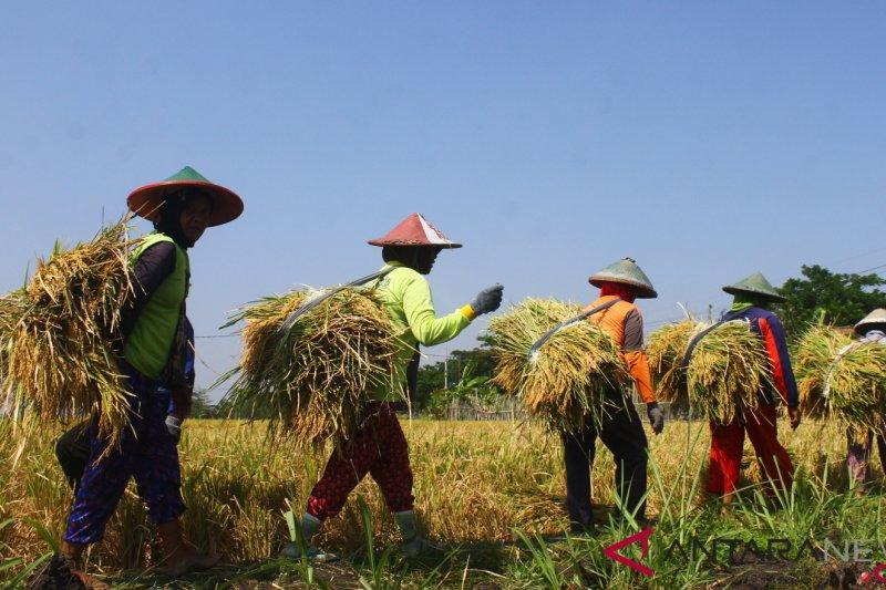 Jawa Timur diperkirakan surplus beras 1,9 juta ton pada semester I