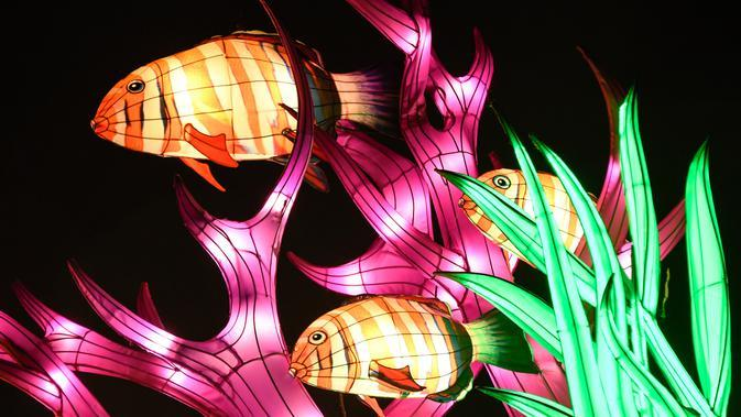 Gambar pada 15 November 2019 menunjukkan patung ikan diterangi lampu berwarna sebagai bagian dari pameran festival cahaya di Kebun Binatang Jardin des Plantes, Paris. Festival Cahaya bertajuk
