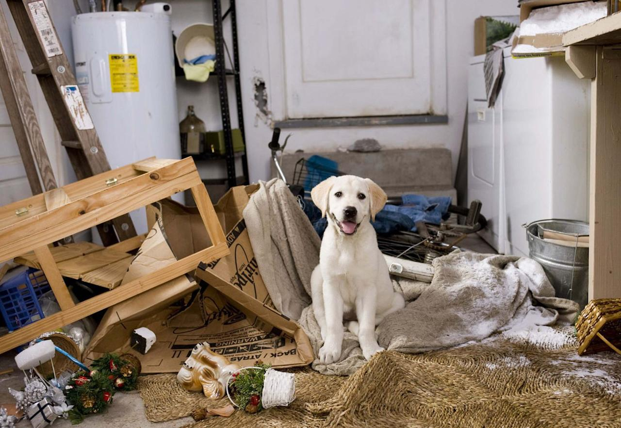 """<p>This fun Labrador pup won over our hearts when he appeared in the heartwarming 2008 film, <em>Marley and Me</em>, alongside Jennifer Aniston and Owen Wilson. </p><p>""""Labradors are loving and full of personality, intelligent and eager to please,"""" Bill Lambert from the <a href=""""https://www.thekennelclub.org.uk/"""" target=""""_blank"""">Kennel Club</a> tells <em>Country Living.</em></p><p>""""As their name suggests, they have keen retrieving skills and were originally trained and bred for this purpose. Today, Labradors are incredibly versatile; while still widely used for their original purpose, they are also just as suited to being a four-legged family companion as they are to working as a guide or assistance dog.""""</p><p><a class=""""body-btn-link"""" href=""""https://www.amazon.com/gp/video/detail/amzn1.dv.gti.36a9f776-43b8-a9ab-9e1d-e92b3ec0d386?tag=syn-yahoo-20&ascsubtag=%5Bartid%7C10050.g.32293379%5Bsrc%7Cyahoo-us"""" target=""""_blank"""">STREAM NOW</a></p>"""