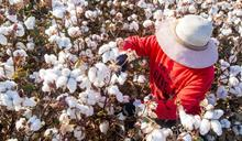 新疆官員回應中國抵制H&M風波:「企業不應將經濟行為政治化」
