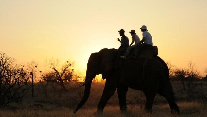 Naik gajah di Zimbabwe. (travelozimbabwe.com)
