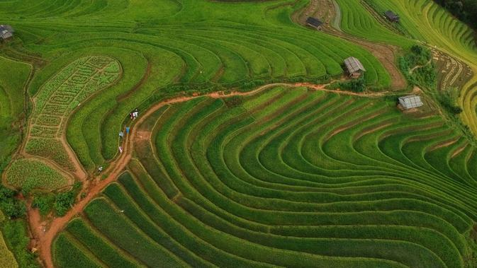 Foto udara menunjukkan sawah terasering di distrik Mu Cang Chai, Vietnam bagian utara pada 18 September 2020. Pesawahan terasering di Mu Cang Chai merupakan destinasi-destinasi wisata yang atraktif dan menyerap kedatangan banyak wisatawan domestik dan mancanegara. (Manan VATSYAYANA/AFP)