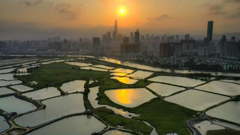 Hong Kong should look to the Greater Bay Area, which includes Shenzhen, to help with its economic recovery in the Covid-19 aftermath, Chan believes. Photo: Martin Chan