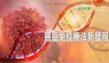 癌症免疫療法新發現 中研院研發新抗體