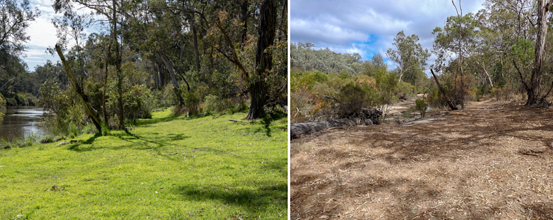 Before and after photos of a paddock show rich grass and then a dry, dirty field.