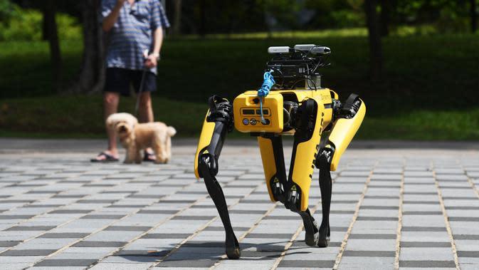 SPOT, robot anjing yang dapat mendeteksi apakah pengunjung memakai masker atau tidak menjalani uji coba putaran keduanya di Bishan Park Singapura, 22 September 2020. Selain menjaga jarak sosial, SPOT meningkatkan kemampuan deteksi masker dan pemetaan 3D tanpa teknologi lidar. (Xinhua/Then Chih Wey)