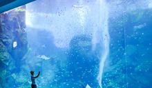 Xpark水族館搶先看!13區海洋世界超詳盡介紹