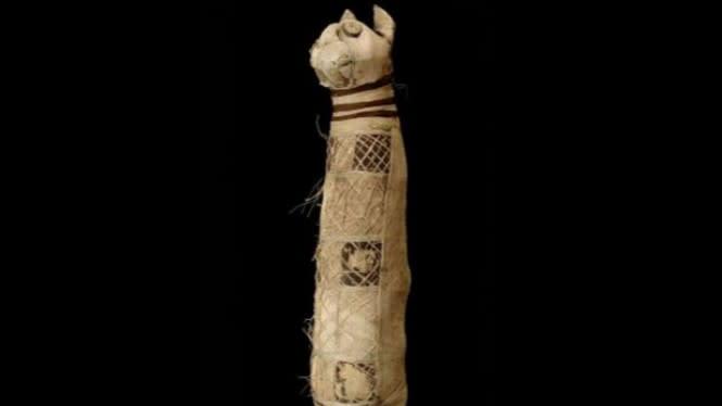 Mumi Kucing Mesir Ini Memiliki 3 Ekor dan 5 Kaki Belakang, Kok Bisa?
