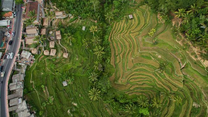 Tegallalang Rice Terraces, Bali, Indonesia. (Via: Dronestagr.am)