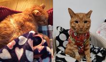 影/女子餵養浪貓7年 發現病倒好心收編讓牠安享晚年