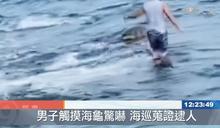 外籍遊客觸摸海龜 觸法遭逮