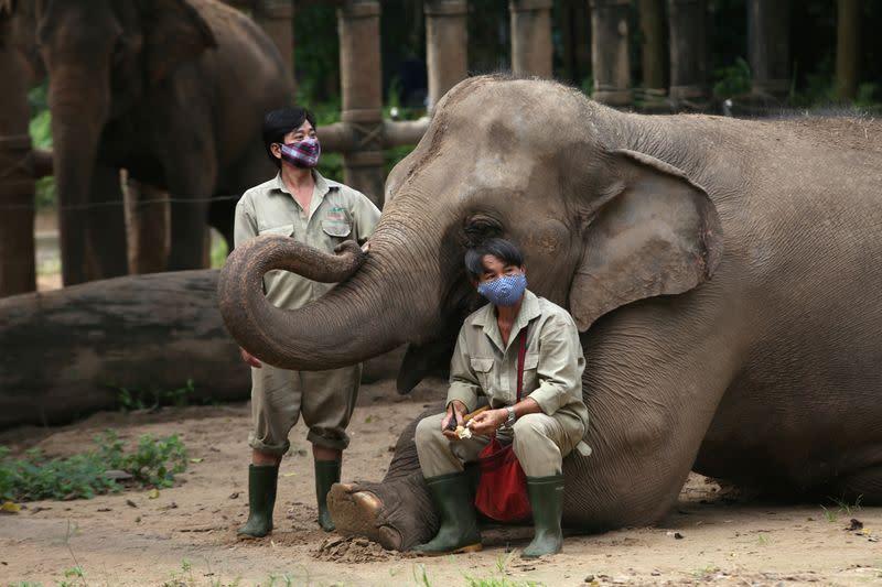 Kebun binatang Vietnam beralih ke sumbangan, tanam makanan demi bertahan hidup selama pandemi