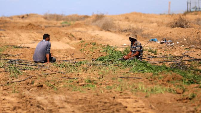 Sejumlah petani Palestina memeriksa lahan pertanian mereka setelah buldoser tentara Israel merusak sebagian lahan itu, yang berada di sebelah timur Khan Yunis di perbatasan Jalur Gaza selatan (13/10/2020). (Xinhua/Yasser Qudih)