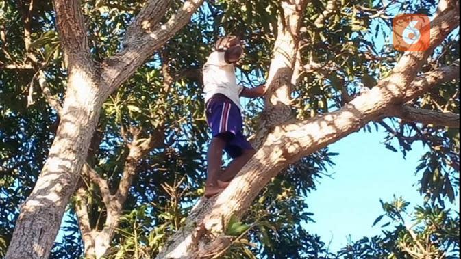 Cerita Warga Dusun Glak di NTT, Bertaruh Nyawa Cari Sinyal di Atas Pohon