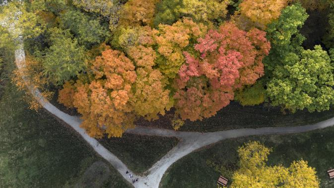 Dalam gambar yang diambil dengan drone ini memperlihatkan warna-warni pepohonan saat musim gugur di Citizen's Park, Barrington, Illinois, Amerika Serikat, 12 Oktober 2020. (Mark Welsh/Daily Herald via AP)