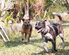 狗來富專案:讓人和動物共存