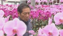 政府取消農曆年宵市場 有花農表示損失慘重