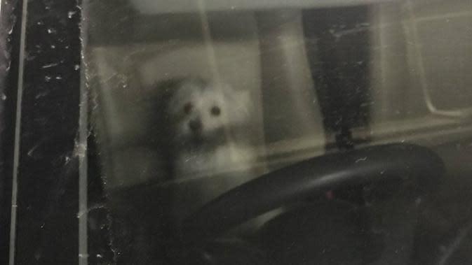 Anjing ditinggal di dalam mobil selama 8 jam oleh pemiliknya