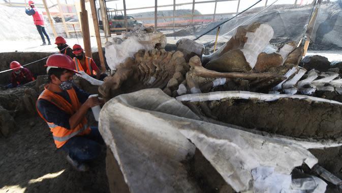 Ahli paleontologi dari Institut Antropologi Nasional bekerja menggali kerangka mammoth di Pangkalan Militer Santa Lucia, Meksiko (8/9/2020). Kerangka mammoth yang diperkirakan berusia antara 10.000 hingga 25.000 tahun itu ditemukan dengan kerangka hewan prasejarah lainnya. (AFP/Rodrigo Arangua)