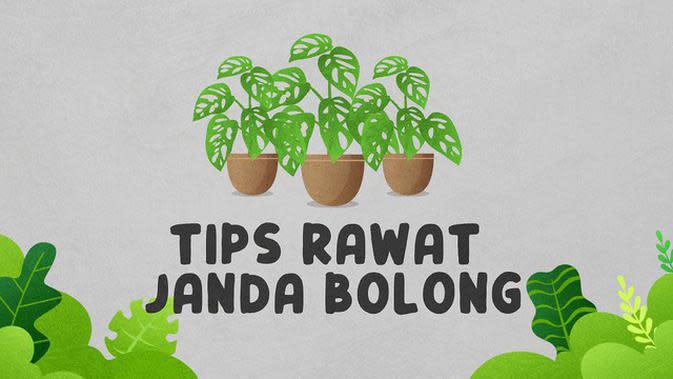 VIDEOGRAFIS: Tips Rawat Janda Bolong