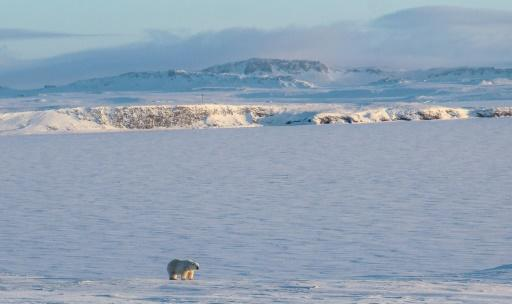 Experts think a recent invasion by polar bears of a Russian village in the Arctic was due to the late freezing of the sea that prevented them from hunting seals