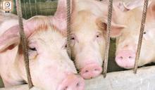 非洲豬瘟致豬價飆升 美冰鮮豬肉將大量供港