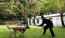 【鋼鐵職人】專業訓練師劉信宏 培育軍犬不遺餘力