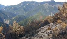 玉山森林大火延燒12天 林務局:今天早上終於滅了