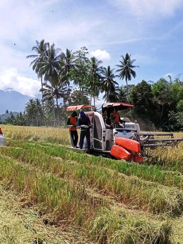 Petani makin bersemangat melakukan aktivitasnya di sawah untuk penuhi stok pangan di Provinsi Sulteng.