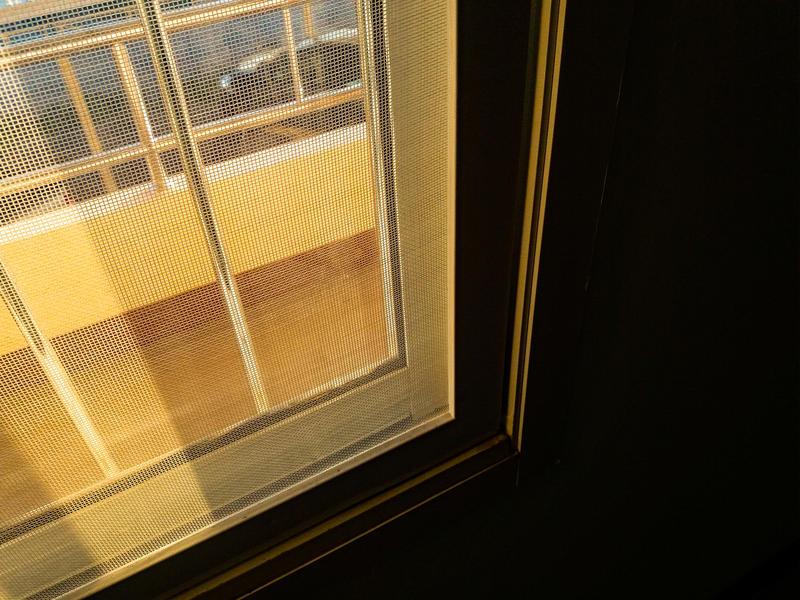 隱翅蟲具趨光性 住家記得關緊門窗