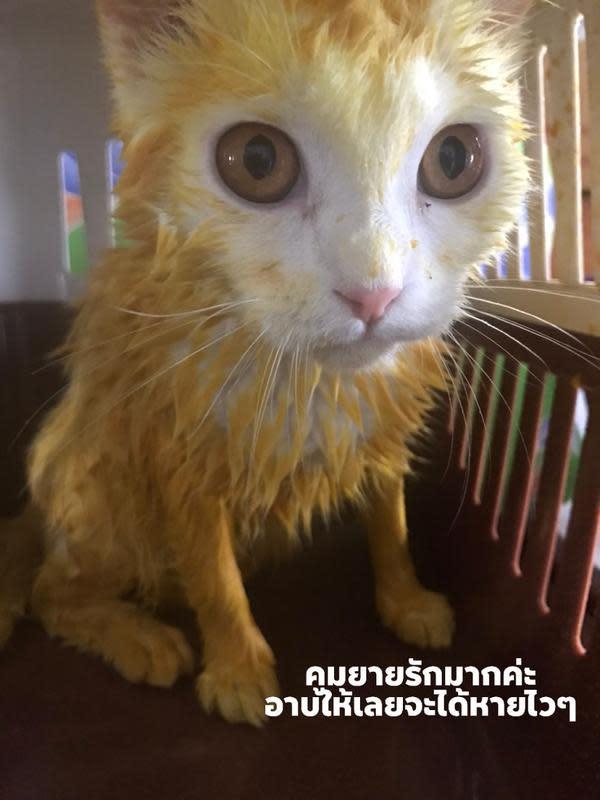 Kucing kuning (Sumber: Boredpanda)