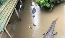 日本水溝養魚 大馬人不服曬霸氣日常