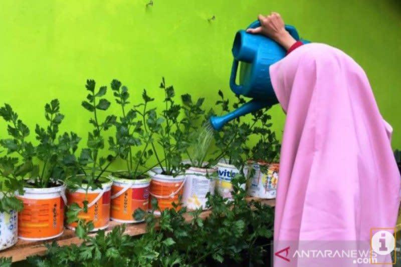 Warga Tanjungpinang diimbau manfaatkan pekarangan rumah hadapi kemarau